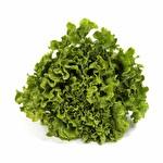 Kıvırcık Salata Adet