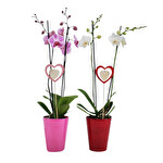 Orkide Çiçeği Çift Dal Kalpli 70 cm