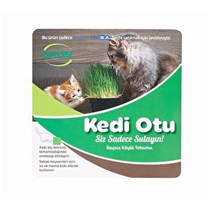 Kedi Otu
